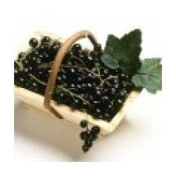 Feketeribizlimag olaj BIO (Ribes nigrum) - 10 ml